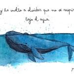 ballena jon fuentes